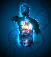 Organentnahme, Transplantation, Nieren, Leber, Herz, Lunge, Bauchspeicheldrüse und der Dünndarm
